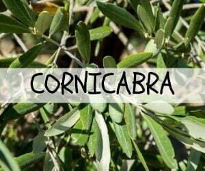 Cornicabra