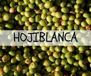 Hojiblanca