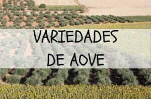 variedades aceite de oliva
