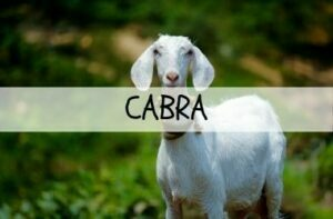 QUESO DE CABRA