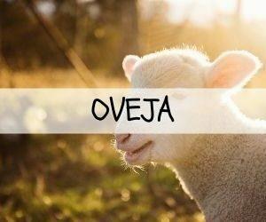 Oveja
